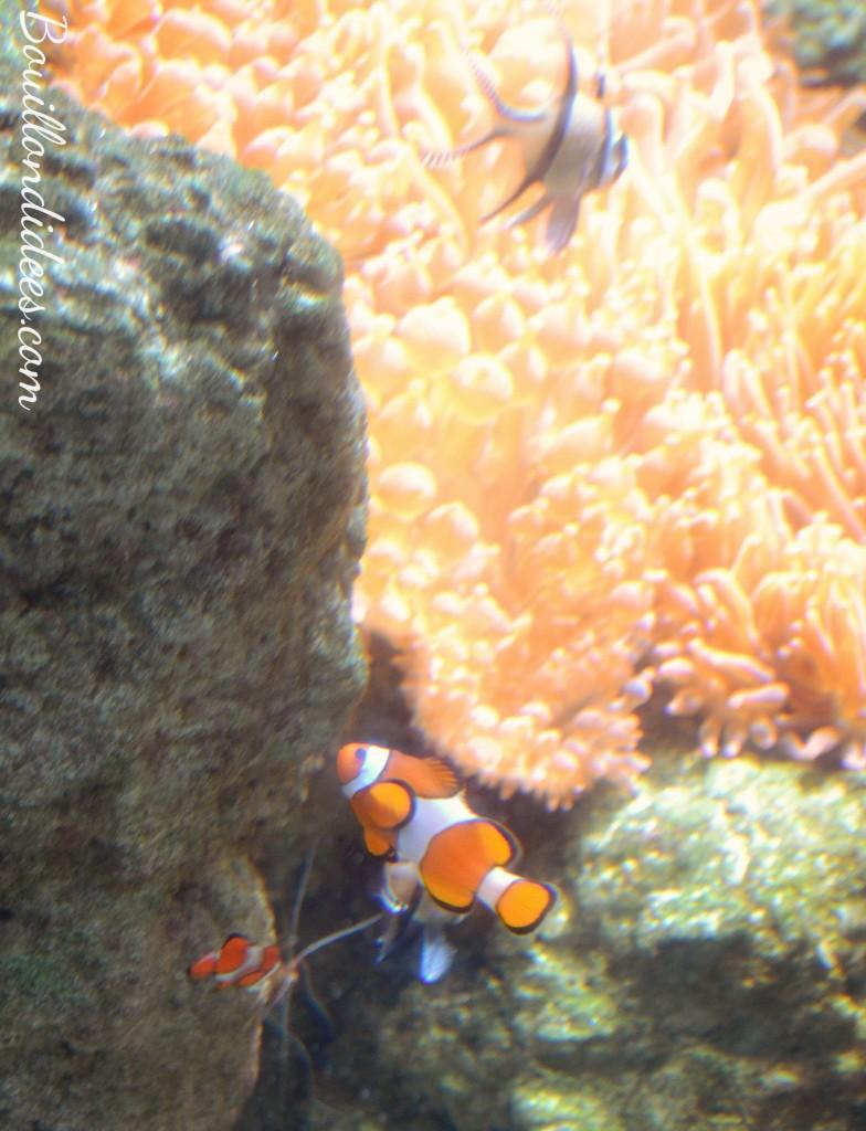 Sortie aquarium Paris cineaqua Trocadéro poisson Némo Bouillondidees