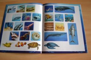 Les animaux de la mer (Editions Fleurus)
