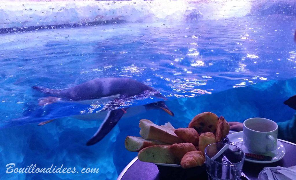 Un petit-déjeuner en tête à tête avec des manchots à Sea Life Paris Val d'Europe - blog Bouillon d'idées