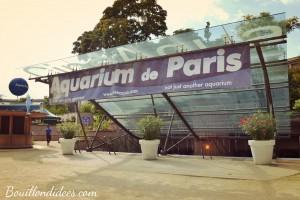 Sortie aquarium Paris cineaqua Trocadéro 4 Bouillondidees