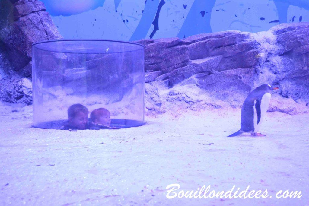 Un petit-déjeuner en tête à tête avec des manchots aquarium Sea Life Paris - blog Bouillon d'idées