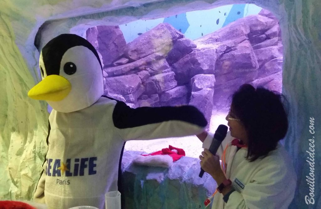 Les Petits Aquariologistes Sea Life - blog Bouillon di'dées