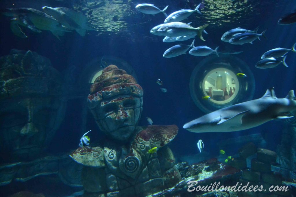 visite de l'aquarium Sea Life Paris Val d'Europe - blog Bouillon di'dées
